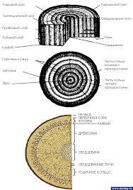 Свойства древесины как строительного материала Реферат страница  Пороки древесины