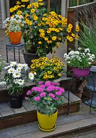 growing perennials in containers