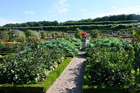 Ornamental Kitchen Garden The Kitchen Garden Chateau And Gardens Of Villandry