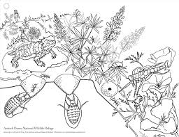Pond Animals Coloring Pages Sotta Co Page Chronicles Network