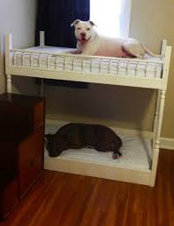 dog bunk beds dogs and the like