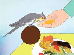 Cockatiel Diet Chart How To Feed Cockatiels With Pictures Wikihow