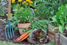 a beginner s guide to starting a garden from scratch
