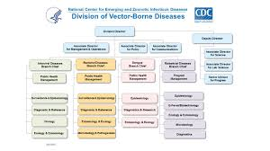 Cdc Organizational Chart Division Of Vector Borne Diseases Organizational Chart