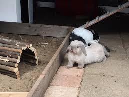 Pin by Konrad Klutz on rabbits together | Animals friends, Animals, Aww