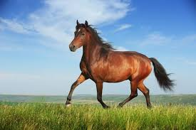 short essay on horse paragraph on horse horse essay my study in ancient times horses had very much importance in wars because it was the sign of power if a party had more horses there was more chance of victory