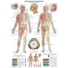 Acupuncture Chart Poster Body Acupuncture Poster