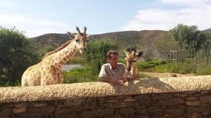 chandelier game lodge ostrich show farm giraffe