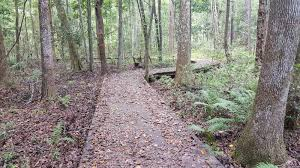 Crooked River State Park Mountain Bike Trail in St. Marys, Georgia -  Directions, Maps, Photos, and Reviews