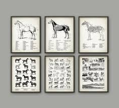 Horse Print Set Of 6 Horse Racing Illustration Veterinary Horse Anatomy Charts Horse Breeds Equine Anatomy Horse Riding Gift Idea
