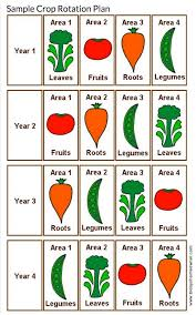 Crop Rotation Chart Rotate Those Veggies For Happier Plants