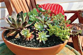 Succulent Container Garden Designs Succulent Container Garden Succulent Container Garden Plans