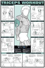 Details About Arm Workout Triceps Professional Weight Training Fitness Gym Poster Wall Chart