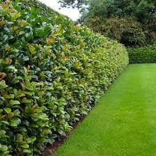 13 Living Privacy Fence Ideas