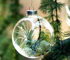 small glass ball ornaments glamorous clear glass ornaments air plant ornaments as small terrariums large clear