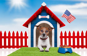 the best dog house