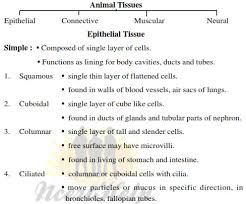 Flow Chart Of Animal Tissue Class 9 Structural Organisation In Animals Ncert Notes Download Pdf