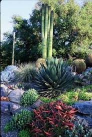 Small Picture 102 best Succulent and Cacti landscape images on Pinterest