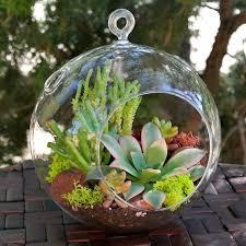 great succulent terrarium ball hanging glass ball terrariums simply succulent plants for terrariums