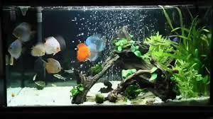 Fish Tank Discus Fish Tank Youtube