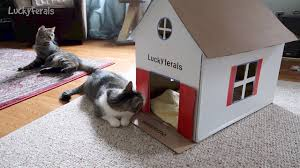 Cardboard House For Cats Stellas New Diy Cardboard Cat House Youtube