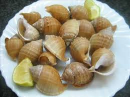 Charming Caracolas De Mar Cocidas