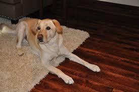 skip sawn hickory dog2