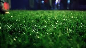 Green grass Closeup Lawn close up Grass background Green grass