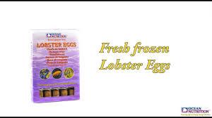 Lobster Eggs by Ocean Nutrition - YouTube