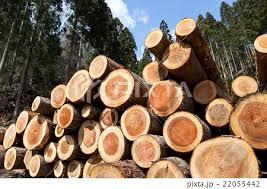 「杉の木年輪画像」の画像検索結果