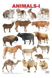 Educational Charts Series Animals 1