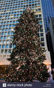 Daley Center Tree Lighting Chicago Christmas Tree Stock Photos Chicago Christmas Tree
