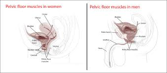 Exercise Chart For Men Step By Step Guide To Performing Kegel Exercises Harvard