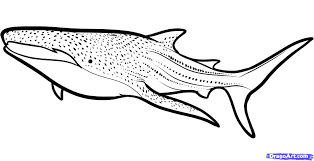 Small Picture how to draw a whale shark whale shark step 610000000895795jpg