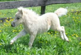 baby white horse.  Baby Cute Baby White Horse  Photo10 Intended Baby White Horse