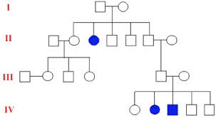 A Pedigree Is A Chart That Shows The Open Door Web Site Ib Biology Genetics Pedigree Charts