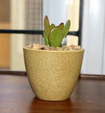 Lovely Jade Plant (Crassula Ovata) :Lucky Plant Indoor Succulent In Ceramic Pot