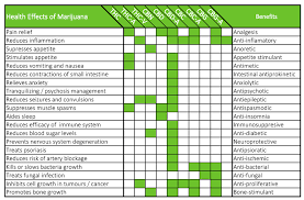 cbd and thc effects
