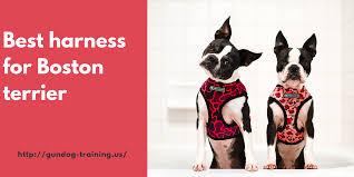 Best Harness For Boston Terrier Gundogtraining Us