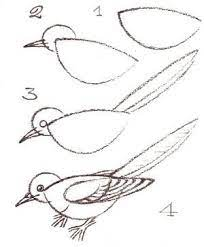 How to draw a bird. by iva | Bird drawings, Drawings, Draw
