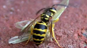 Yellow Jacket Bites Insect's Head Off in Violent Attack - YouTube