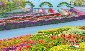 garden com. Brilliant Garden Dubai Miracle Garden 05 To Com N