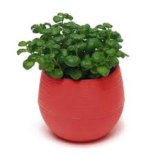 office flower pots. Colourful-Cute-Round-Plastic-Plant-Flower-Pot-Home- Office Flower Pots O