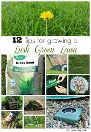 lawncare ad 109 best lawn images on pinterest garden tips gardening and