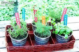 indoor tabletop garden table top herb garden patio herb garden overstuffed indoor tabletop herb garden diy