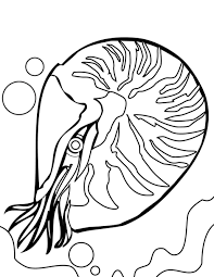 Coral clipart coloring page - Pencil and in color coral clipart ...