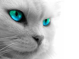 Hd Cat Eyes Wallpapers Download Free 672794