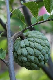 2pcspackSugar Apple Seeds ANNONA SQUAMOSA Apple Custard Apple Annona Fruit Tree