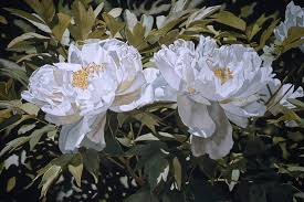 deborah rubin paints in watercolor and occasionally acrylic and gouache she has been pushing the boundaries of photo realism and hyper realism since the
