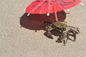 Resultado de imagen para crab sunbathing